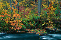 Northern hardwood forest<br />   along the Gunpowder Falls River<br /> Gunpowder Falls State Park<br /> Baltimore County,  Maryland