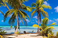 Beautiful Motu Tereia Blue Lagoon, coconut palm trees and white sand beach, in Rangiroa atoll, Tuamotus French Polynesia, South Pacific Ocean