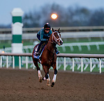 November 4, 2020: Likeable, trained by trainer Todd A. Pletcher, exercises in preparation for the Breeders' Cup Juvenile at Keeneland Racetrack in Lexington, Kentucky on November 4, 2020. Scott Serio/Eclipse Sportswire/Breeders Cup