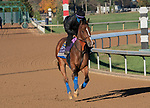 November 4, 2020: Gamine, trained by trainer Bob Baffert, exercises in preparation for the Breeders' Cup Filly & Mare Sprint at Keeneland Racetrack in Lexington, Kentucky on November 4, 2020. Jessica Morgan/Eclipse Sportswire/Breeders Cup: