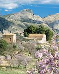 Spain, Costa Blanca, near Benidorm, El Castell de Guadalest: small village upcountry, Almond Blossom | Spanien, Costa Blanca, bei Benidorm, El Castell de Guadalest: kleiner Ort im Landesinneren, Mandelbluete