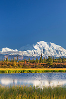 Hiker walks by a tundra pond with Mt. Denali in the distance, Denali National Park, Interior, Alaska