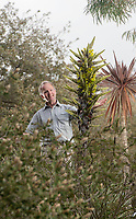 BNPS.co.uk (01202) 558833<br /> Pic: ZacharyCulpin/BNPS<br /> <br /> Stephen Griffith the Head Gardener at Abbotsbury Subtropical Gardens in Dorset pictured with the  plant<br /> <br /> A rare exotic plant that 'eats sheep' has blossomed for the first time in the 15 years it has been growing in a botanical garden.<br /> <br /> This bizarre-looking Puya Chilensis sprouted out of the ground and has grown to about eight feet tall in just a few short weeks.<br /> <br /> Native to South America, it uses its sharp spines to snare and trap sheep and other animals in the Andes mountains.
