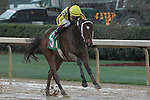 HOT SPRINGS, AR - MARCH 12: Terra Promessa #5 with jockey Ricardo Santana Jr. in the Honeybee Stakes at Oaklawn Park on March 12, 2016 in Hot Springs, Arkansas. (Photo by Justin Manning)