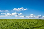 Deutschland, Bayern, Oberbayern, Chiemgau: Wiese und weiss-blauer Himmel | Germany, Upper Bavaria, Chiemgau, meadow and blue sky with wihite clouds