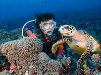 A Diver watchng a fearless Hawksbill Turtle, Eretmochelys imbricata, Tubbataha Reef, Philippines.