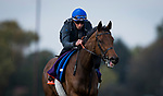 October 31, 2018 : Wild Illusion (GB), trained by Charlie Appleby, exercises in preparation for the Breeders' Cup Filly & Mare Turf at Churchill Downs on October 31, 2018 in Louisville, Kentucky. Evers/ESW/Breeders Cup