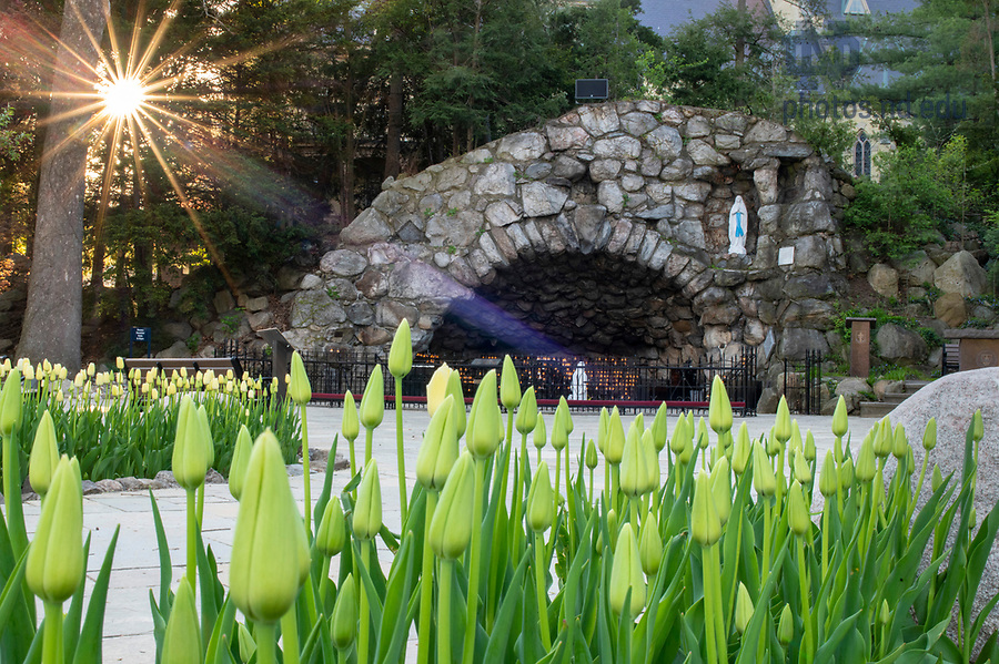 May 3, 2020; Grotto in spring, 2020. (Photo by Barbara Johnston/University of Notre Dame)