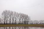 Europa, DEU, Deutschland, Nordrhein Westfalen, NRW, Rheinland, Niederrhein, Bedburg-Hau, Typische Landschaft, Regenwetter, Dunst, Arktische Wildgaense, Formation, Kategorien und Themen, Natur, Umwelt, Landschaft, Jahreszeiten, Stimmungen, Landschaftsfotografie, Landschaften, Landschaftsphoto, Landschaftsphotographie, ....[Fuer die Nutzung gelten die jeweils gueltigen Allgemeinen Liefer-und Geschaeftsbedingungen. Nutzung nur gegen Verwendungsmeldung und Nachweis. Download der AGB unter http://www.image-box.com oder werden auf Anfrage zugesendet. Freigabe ist vorher erforderlich. Jede Nutzung des Fotos ist honorarpflichtig gemaess derzeit gueltiger MFM Liste - Kontakt, Uwe Schmid-Fotografie, Duisburg, Tel. (+49).2065.677997, archiv@image-box.com, www.image-box.com]