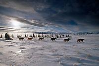 Kjetil Backen on Kaltag to Unalakleet Portage<br /> 2004 Iditarod