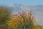 Desert Willow Golf Course, Palm Desert, CA