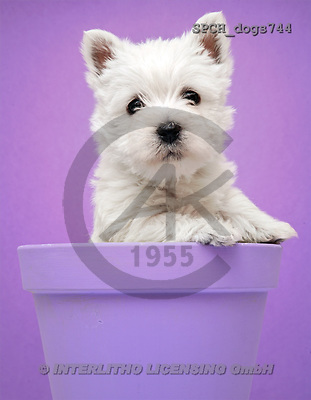 Xavier, ANIMALS, dogs, photos(SPCHdogs744,#A#) Hunde, perros