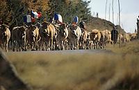 Europe/France/Midi-Pyrénées/12/Aveyron/Aubrac: Départ du troupeau pour la transhumance vers la vallée