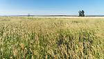 Country Fields, New England, NSW, Australia
