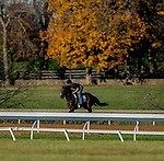 November 4, 2020: Bombard, trained by trainer Richard E. Mandella, exercises in preparation for the Breeders' Cup Turf Sprint at Keeneland Racetrack in Lexington, Kentucky on November 4, 2020. Scott Serio/Eclipse Sportswire/Breeders Cup