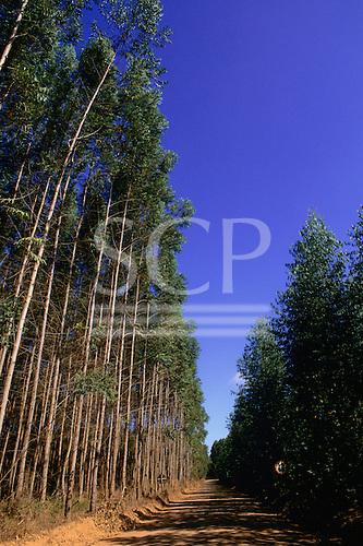 Espirito Santo State, Brazil. Plantation of eucalyptus trees owned by Aracruz.