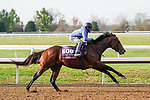 November 5, 2020: Four Wheel Drive, trained by trainer Wesley A. Ward, exercises in preparation for the Breeders' Cup Turf Sprint at Keeneland Racetrack in Lexington, Kentucky on November 5, 2020. Dan Heary/Eclipse Sportswire/Breeders Cup/CSM