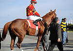 09 October 17: Field Commission, ridden by Julien Leparoux and trained by Daniel Vella, wins the grade 2 Nearctic Stakes for three year olds and upward at Woodbine Racetrack in Rexdale, Ontario.