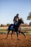 November 4, 2020: Outadore, trained by trainer Wesley A. Ward, exercises in preparation for the Breeders' Cup Juvenile Turf at Keeneland Racetrack in Lexington, Kentucky on November 4, 2020. Gabriella Audi/Eclipse Sportswire/Breeder's Cup/CSM
