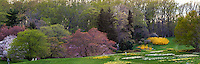 Woodland panorama of spring trees leafing out - Winterthur Garden