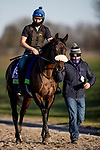 November 3, 2020: Siskin, trained by trainer Ger Lyons, exercises in preparation for the Breeders' Cup Mile at Keeneland Racetrack in Lexington, Kentucky on November 3, 2020. Alex Evers/Eclipse Sportswire/Breeders Cup