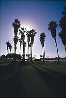 Silhouetted palm trees in park<br />