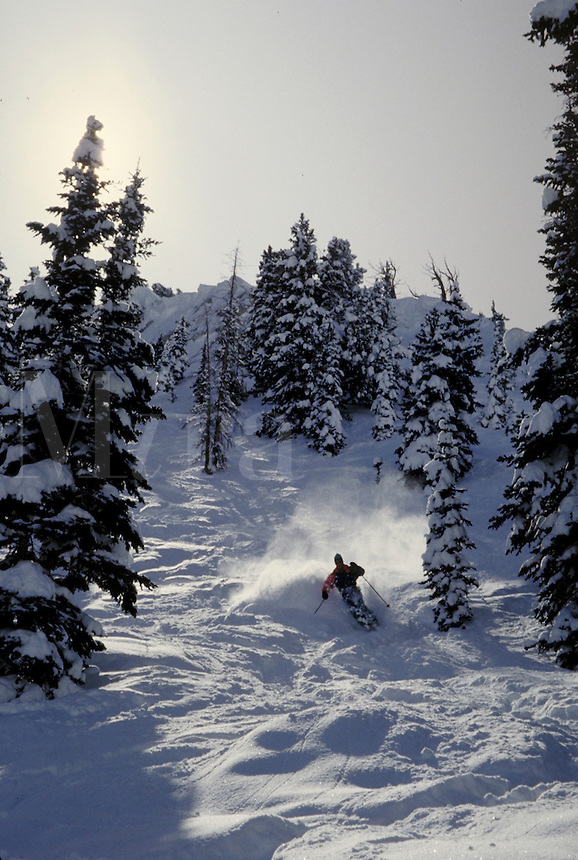 A lone skier cuts down through the trees in light powder on a backlit slope. Ray Nelson. Utah, Alta Ski Resort.