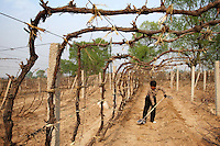 A farmer working in her dry field near Tianmo desert in Hebei Province, China. Desertification is the process by which fertile land becomes desert, typically as a result of drought, deforestation, or inappropriate agriculture. 41 % of China's landmass in classified as arid or desert. Inappropriate farming methods and over cultivation have contributed to the spreading of deserts in China in recent years.