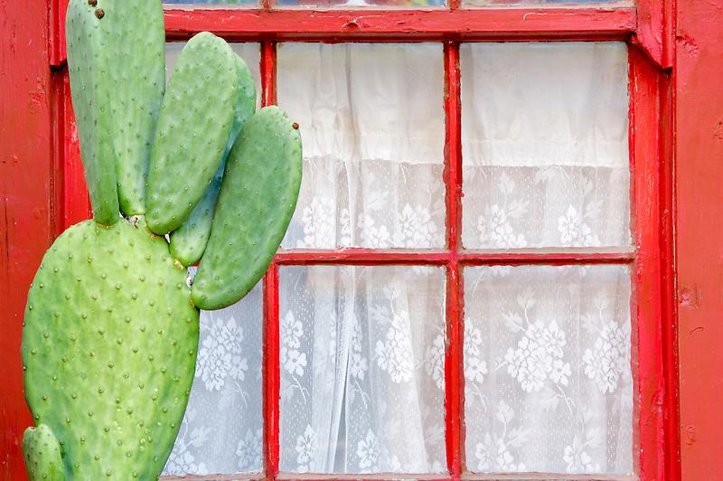 Red window with white curtin and cactus. Tucson. Arizona