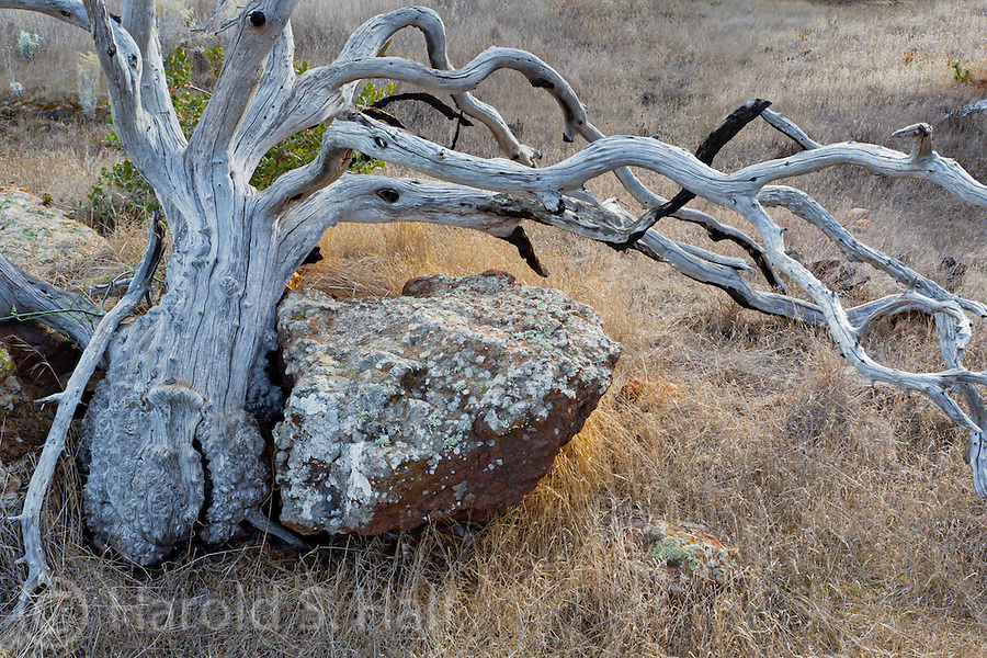 The Channel Islands National Park off the coast of California offer grand vistas, but this old knurled tree, catching the last bit of sunlight is what caught my eye.