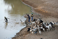 BURKINA FASO, Kaya, cattle herder with goats at small river/ Tierherde in einem Flussbett