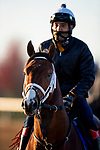 November 2, 2020: Abarta, trained by trainer Brad Cox, exercises in preparation for the Breeders' Cup Juvenile Turf at  Keeneland Racetrack in Lexington, Kentucky on November 2, 2020. Alex Evers/Eclipse Sportswire/Breeders Cup