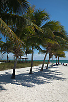 Palm Trees, Sombrero Beach, Vaca Key, Marathon, Florida Keys