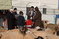 Tripoli, Libya - Eid al-Adha, Id al-Adha.  Buying a sheep for the annual feast when Muslims commemorate God's mercy in allowing Abraham to sacrifice a ram instead of his son, to prove his faith.