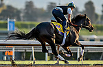 October 27, 2019 : Breeders' Cup Classic entrant Elate, trained by William I. Mott, exercises in preparation for the Breeders' Cup World Championships at Santa Anita Park in Arcadia, California on October 27, 2019. Scott Serio/Eclipse Sportswire/Breeders' Cup/CSM