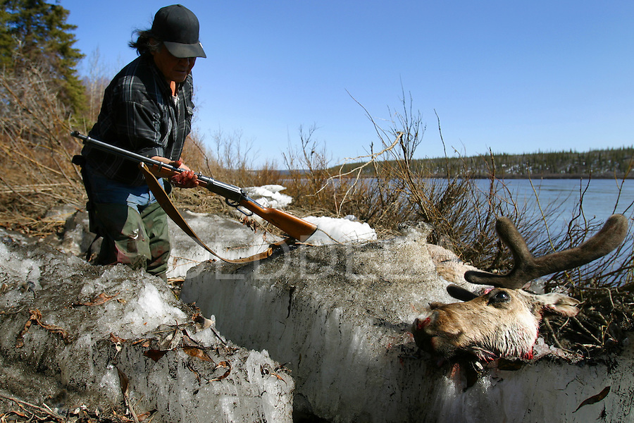 Caribou hunter, Joel Peter, sets down his rifle after shooting a Porcupine caribou along the Porcupine River near Old Crow, Yukon Territory in Canada.