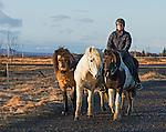 Icelandic ponies and rider at Selfoss