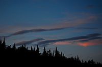Sunset Over Balsam Fir Trees In The Adirondack Mountains Of New York State