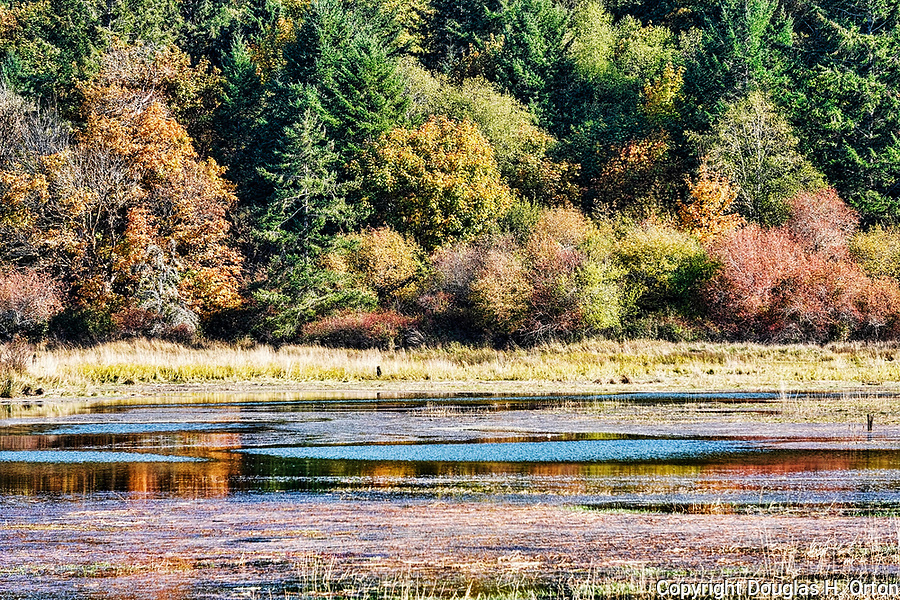 Fall color along the Tahuya River near its mouth on Hood Canal.  Kitsap Peninsula, near Belfair, Washington.