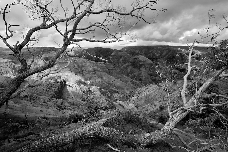 Waimea Canyon with dead tree and light peaking through. Kauai, Hawaii