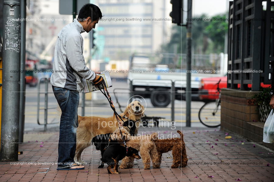 CHINA, Megacity Hong Kong, Kowloon, pedestrian with dogs