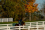 October 31, 2020: Jesus' Team, trained by trainer Jose Francisco D'Angelo, exercises in preparation for the Breeders' Cup Dirt Mile at Keeneland Racetrack in Lexington, Kentucky on October 31, 2020. Scott Serio/Eclipse Sportswire/Breeders Cup/CSM