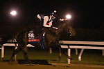 Yaupon, trained by trainer Steven M. Asmussen, exercises in preparation for the Breeders' Cup Sprint at Keeneland Racetrack in Lexington, Kentucky on November 1, 2020. /CSM