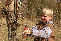 Kind, Junge schneidet mit einer Astschere Zweige von einer Kopfweide, Weide, Weiden, Salix, Sallow, Willow, Pollard Willow