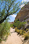 The Hot Springs Trail along the Rio Grande in the southeast corner of Big Bend National Park. The 3 mile path passes especially abundant desert plant life, at first crossing a plateau above the river which flows through a short, deep canyon below, traversing several side ravines before descending to the waters edge at the hot springs themselves, then continuing on to the remains of a small village founded in 1909.<br /> The springs, a few yards from the rivers edge, are enclosed in a brick wall creating a small bathing pool. The pool still receives quite a few visitors who enjoy the clear 105° waters.