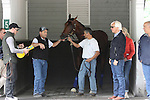 June 4, 2015: Triple Crown hopeful American Pharoah schools in the Belmont Park paddock in preparation for the Belmont Stakes. At right is trainer Bob Baffert; at left (black vest over white t-shirt) is assistant trainer Jimmy Barnes. Belmont Park,  Elmont, NY. Joan Fairman Kanes/ESW/CSM