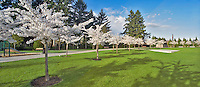 Oregon Korean War Memorial with flowering cherry trees. Wilsonville, Oregon