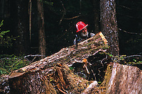 A logger moves the trunk of a freshly cut tree. Alaska.