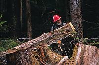 A logger moves the trunk of a freshly cut tree. Alaska.