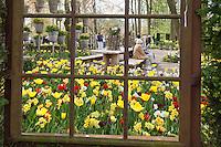 """Hollande, région des champs de fleurs, Lisse, Keukenhof, au travers une fenêtre // Holland, """"Dune and Bulb Region"""" in April, Lisse, Keukenhof, seen through a window."""